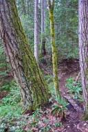 Threatened Trail Network